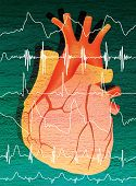 Human Heart And Cardiogram Line. Digital Illustration poster