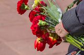 Red Spring Flowers In The Hand Of An Elderly Woman-a Veteran Of The Great Patriotic War. Victory Day poster