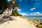 Pristine Undeveloped Sand Beach Forest Low Tide