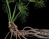 Night Plant Life