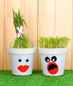 A pots of grass on wooden background