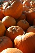 Jumbled Pumpkins