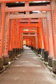 Famous shinto shrine of Fushimi Inari Taisha near Kyoto includes around 1300 orange torii gates, Jap