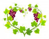 Grapes with leaves in the form of heart. Vector