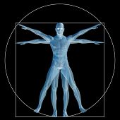 High resolution Vitruvian human or man as a concept,metaphor or conceptual 3d anatomy body for biology,anatomical,Leonardo,proportion,medicine,symbol,physiology,skeleton,health,humanity or morphology