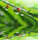image of bubble sheet  - fresh morning dew and ladybird - JPG