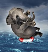 stock photo of storms  - Surviving adversity and managing risk for big business challenges and uncertainty with a large elephant floating on a life preserver in a storm ocean background overcoming fear of loss for goal success - JPG