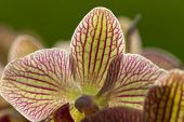 close up of Freaky orchid pink and yellow