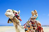 stock photo of dromedaries  - Tourists children riding camel  on the beach of  Egypt - JPG