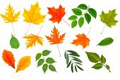 Big collection of colorful leaves. Vector illustration.