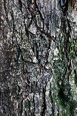 Tree bark texture, abstract background.