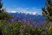 foto of olympic mountains  - Hurricane Ridge Olympic National Park Washington USA - JPG