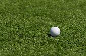Lacrosse Ball On Grass 3