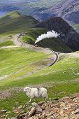 Sheep and mountain railway from the Llanberis Pass, Mount Snowdon, Snowdonia, Wales UK