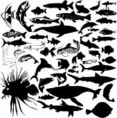 picture of animal silhouette  - 46 pieces of detailed vectoral fish and sea animals silhouettes - JPG