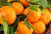 Ripe Mandarins With Leaves