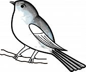 foto of nightingale  - Hand drawn bird on a twig - JPG