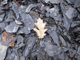 foto of shale  - Autumn leaf on gray shale rock background - JPG