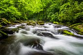 Cascades In The Oconaluftee River, At Great Smoky Mountains National Park, North Carolina.