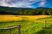 stock photo of cade  - Fence and field at Cade - JPG