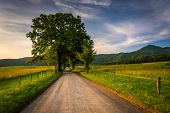 stock photo of cade  - Tree and fence along a dirt road at Cade - JPG