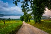foto of cade  - Trees along a dirt road on a foggy morning at Cade - JPG