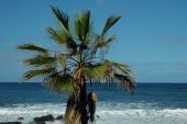 Palm tree by the sea
