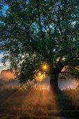 Sun Beams Thorough Trees And Greens