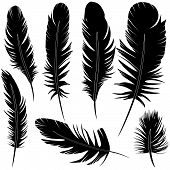 image of feathers  - Feather of bird set vector illustration sketch - JPG