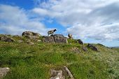 foto of faroe islands  - Sheep on Mykines with the blue sky  - JPG
