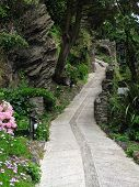 Floral Cliff Pathway