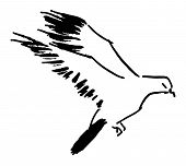 Pigeon. Hand drawn in ink stile
