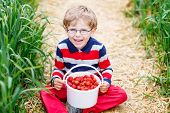 Little Child Picking And Eating Strawberries On Berry Farm