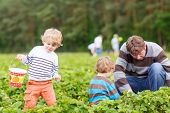 stock photo of father time  - Two little funny kid boys and their father on organic strawberry farm in summer picking berries - JPG