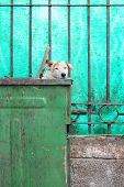foto of dumpster  - Stray dog peaks head out of dumpster - JPG