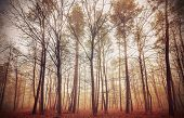 Retro Filtered Picture Of A Misty Forest.