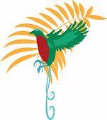 Bird of paradise vector illustration