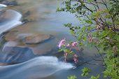 Blooming Stream