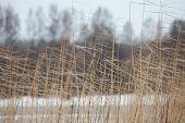 cold winter wind