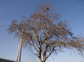 Tree over pylon