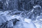 Winter forest. Nature background