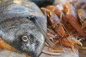 Fresh Fish Of The Mediterranean