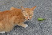 Red cat and green cicada