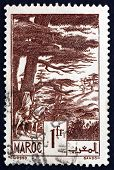 Postage Stamp French Morocco 1939 Atlas Cedars