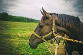 foto of brown horse  - Portrait of a horse brown horse o farmland - JPG
