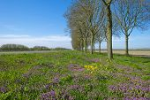 pic of row trees  - Purple wildflowers under a row of trees in spring - JPG