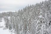 stock photo of snowy hill  - Winter forest - JPG