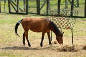 stock photo of horses eating  - One Brown Horse Animal Eating Hay Beside the Hay Rack at the Farm on a Sunny Climate - JPG