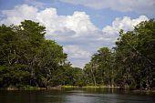 stock photo of tarzan  - Silver River State Park in Ocala - JPG