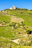 pic of elm  - Saint Elme fortress - JPG